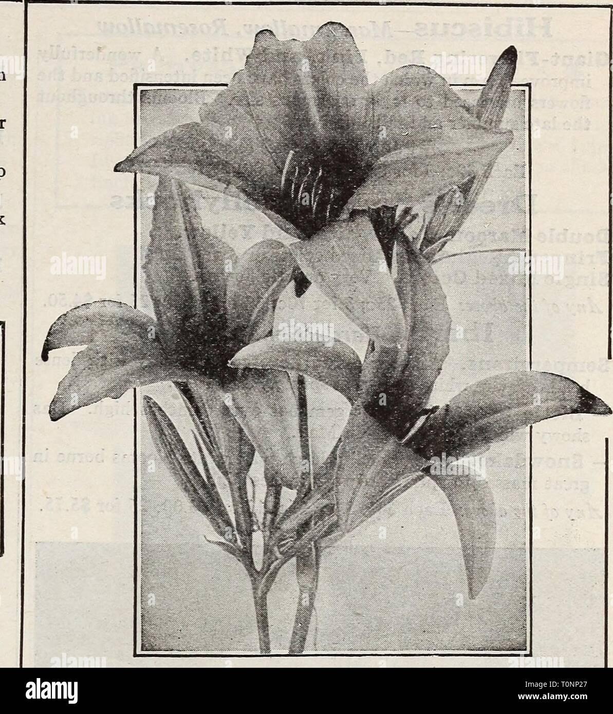 Berühmt Dreer's Lampen Pflanzen, Sträucher und dreer's Lampen Pflanzen @LH_69