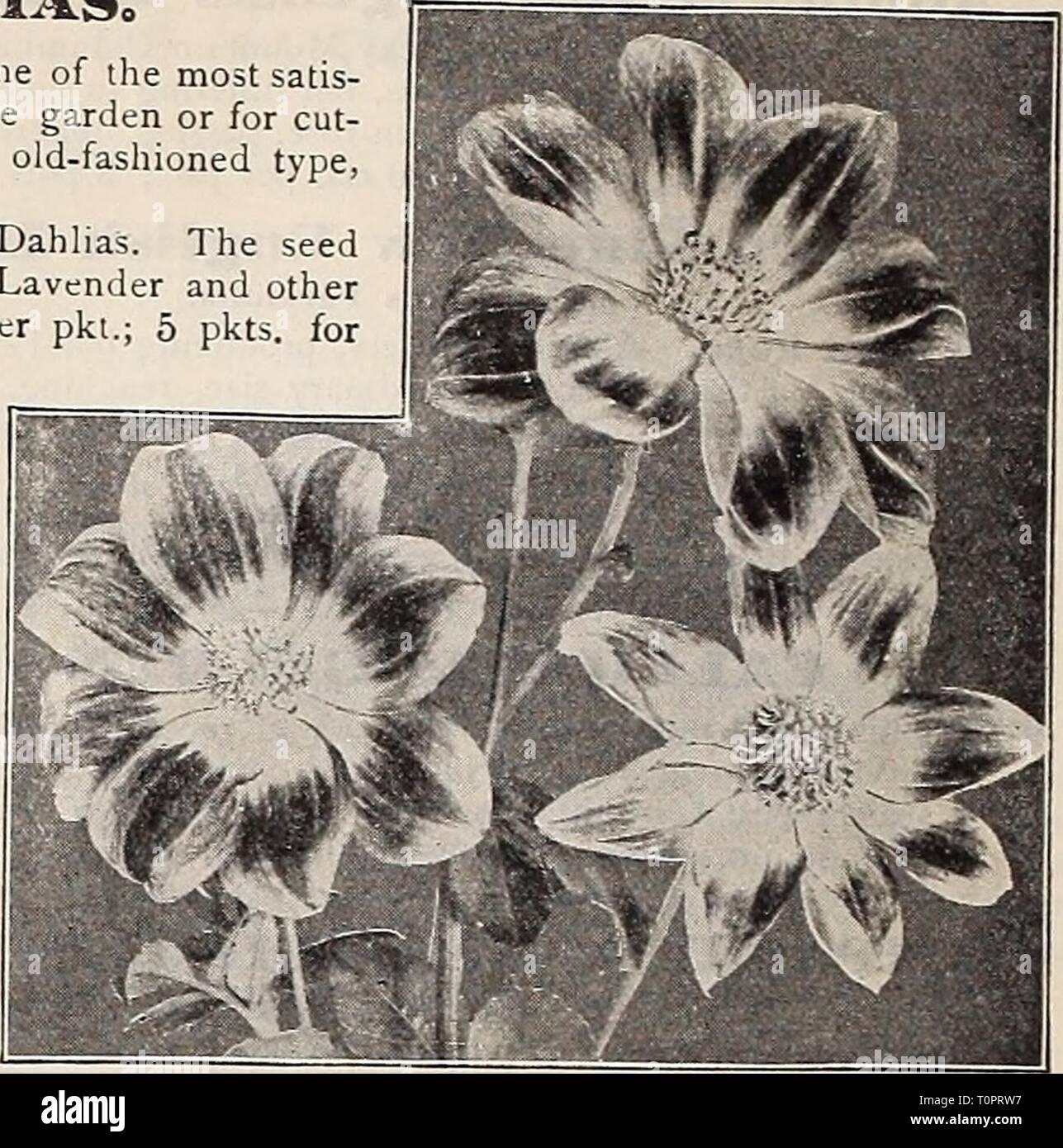 """Dreer's Garten Buch 1906 Dreer's Garten Buch: 1906 dreersgardenbook 1906 henr Jahr: 1906 12 1 l^ """"RrADRE! R4) hl [ADELPHIAMWFiOWFBFFn KnyFiTiF^- iTtn GRAND NEW^ SINGI. E DAHI. IAS 0 Single Dahlien sind eine der einfac. st Sachen vom Samen zum Wachsen und eine der am meisten satis - faclory Spätsommer und Herbst Blumen für die Dekoration des Gartens oder für Cut-ting. Die drei neuen Sorten unten angeboten werden, sind weit im Voraus der altmodischen Art und sollte einen Platz in jedem Garten finden. """"2187 neue Jahrhundert, Das ist die neueste Entwicklung im Einzelnen Dahlien der Samen s lieen hat. ived vom herrlichen Stockbild"""