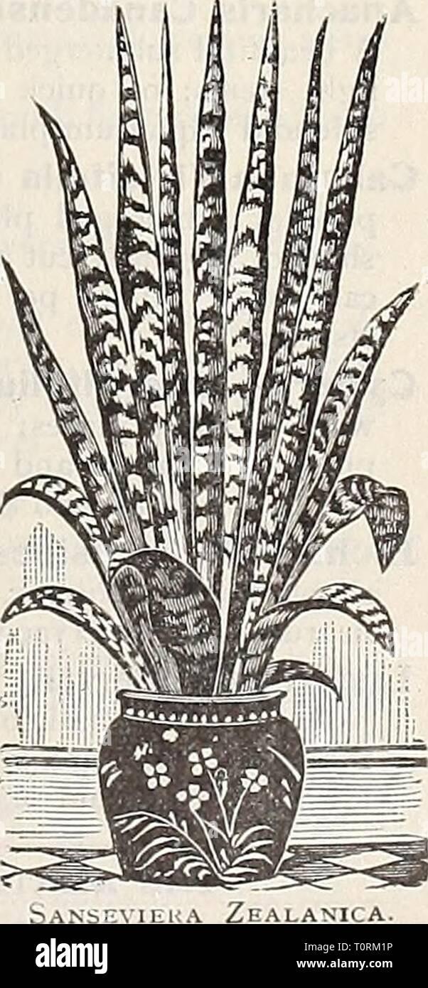 Dreer ist Herbst Katalog von Glühbirnen Dreer ist Herbst Katalog der Zwiebeln pflanzen Samen etc. für Herbst Pflanzung 1909 dreersautumncata 1909 henr Jahr: 1909 Luxonne. Reich, aber Soft violett-Purpur; sehr süß. Der Prinzessin von Wales. Nicht ganz so groß wie Luxonne, ein Schatten heller in der Farbe; intensiv duftend. Preis, eine der oben genannten Doppel- oder Einzelzimmer Veilchen, 15 cts. Jedes; - 1,50 $ pro dtz.; $ 10,00 pro 100. DREER in großartigen Mai-blühenden Bauerngarten oder Boulevard Tulpen wir zehn dieser wunder-schön Klasse der Tulpen auf der cov-ers Dieser Katalog zeigen. Für de-scriptions und Preise finden Sie auf den Seiten 10 und 11. Jeder s Stockfoto