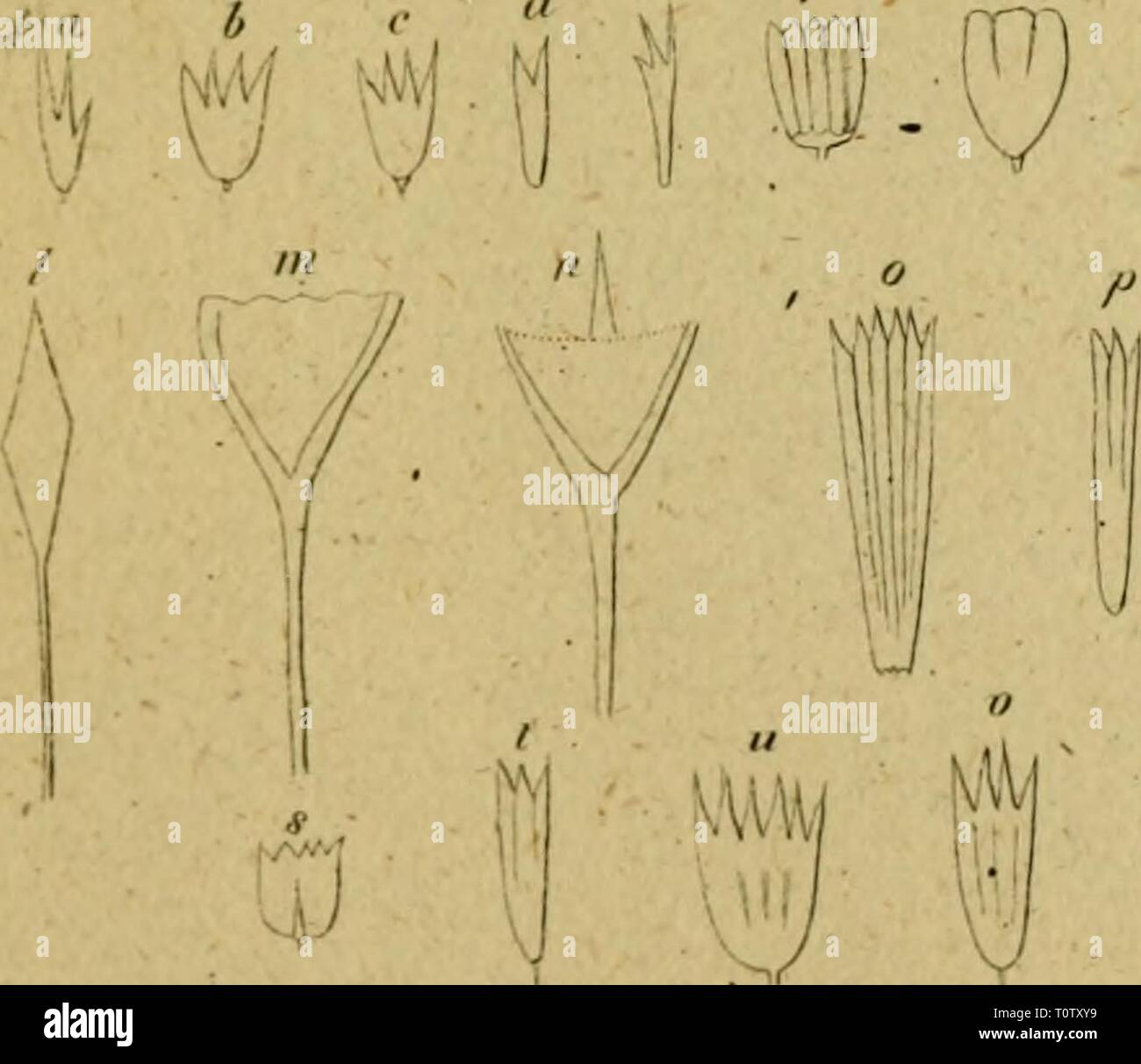 Eine Lektüre in die Entomologie Stockfoto