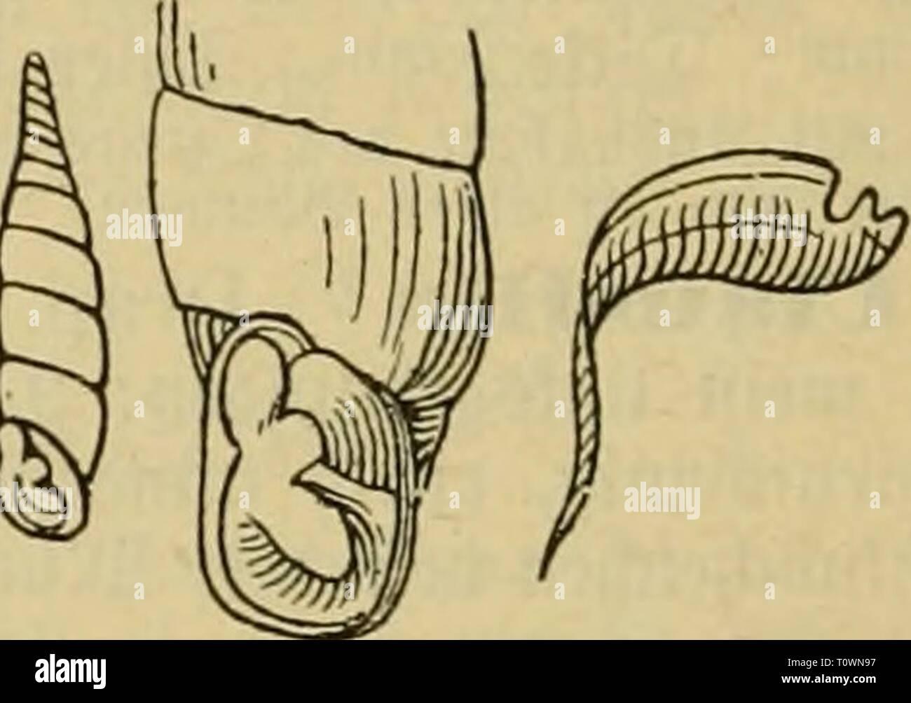 Dr. Johannes Leunis Synopsis der Dr. Johannes Leunis Synopsis der thierkunde. Ein Handbuch für hö hier Lehranstalten und für alle, welche sich wissenschaftlich mit der Naturgeschichte der thiere beschäftigen wollen drjohannesleuni 01 leun Jahr: 1883 890 3 ootogie Landkreis Ludwigslust 9^ atuvgcid) ic^te beö2 £) Zehn-Eid^3, §. 692. (Gc^ alc faft Gans giatt cter fein = geftreift; Chale ftavt geftreift ober Geri^' ivt; lltcnts kurz i^cvl^ aitt-en; Uckrftdjt bcr QJrup^ Spbn. [Sd^^ en ftarf lieüfncdjctc oueigcfc^ nitten; DDionbfalte ich Fcf) ein. Marpressa. ^^ nic t au^^ gefc nitten; tgJJ^, ât, faIt 5 Fe (, es^ Fusülus. _, ^^â Stockfoto