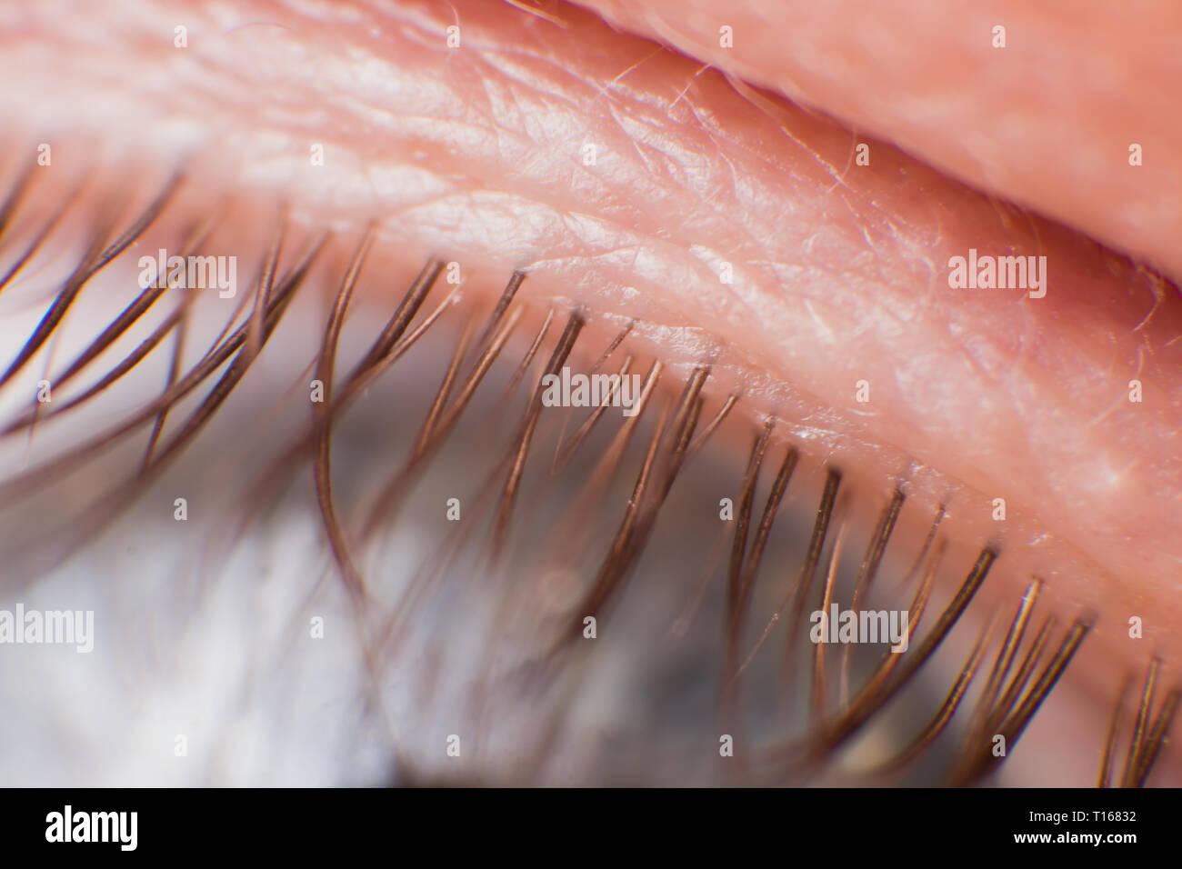 Super Makro Bild von Wimpern, Wimpern Stockbild