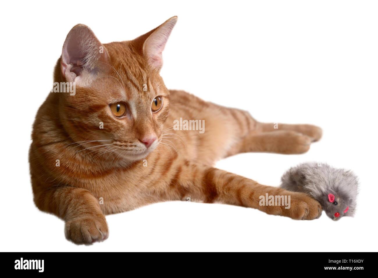 Ginger kitten Verlegung mit einem grauen Pelz maus Spielzeug Stockfoto