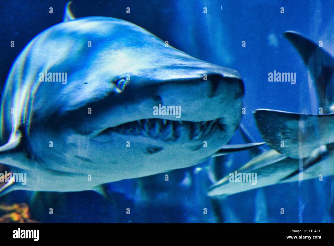 Haifisch-Tank robert von kym Größe Angelegenheiten, die Websites datieren