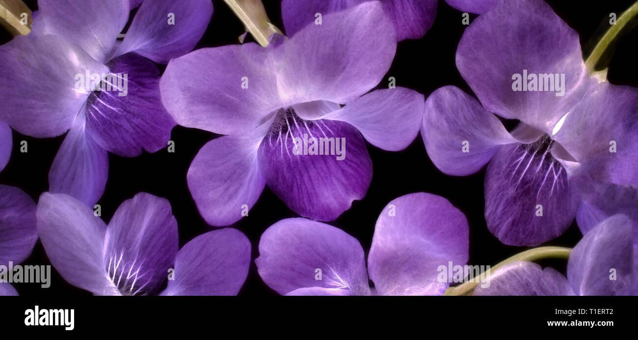 In der Nähe von violetf wildlowers. Oregon Stockbild