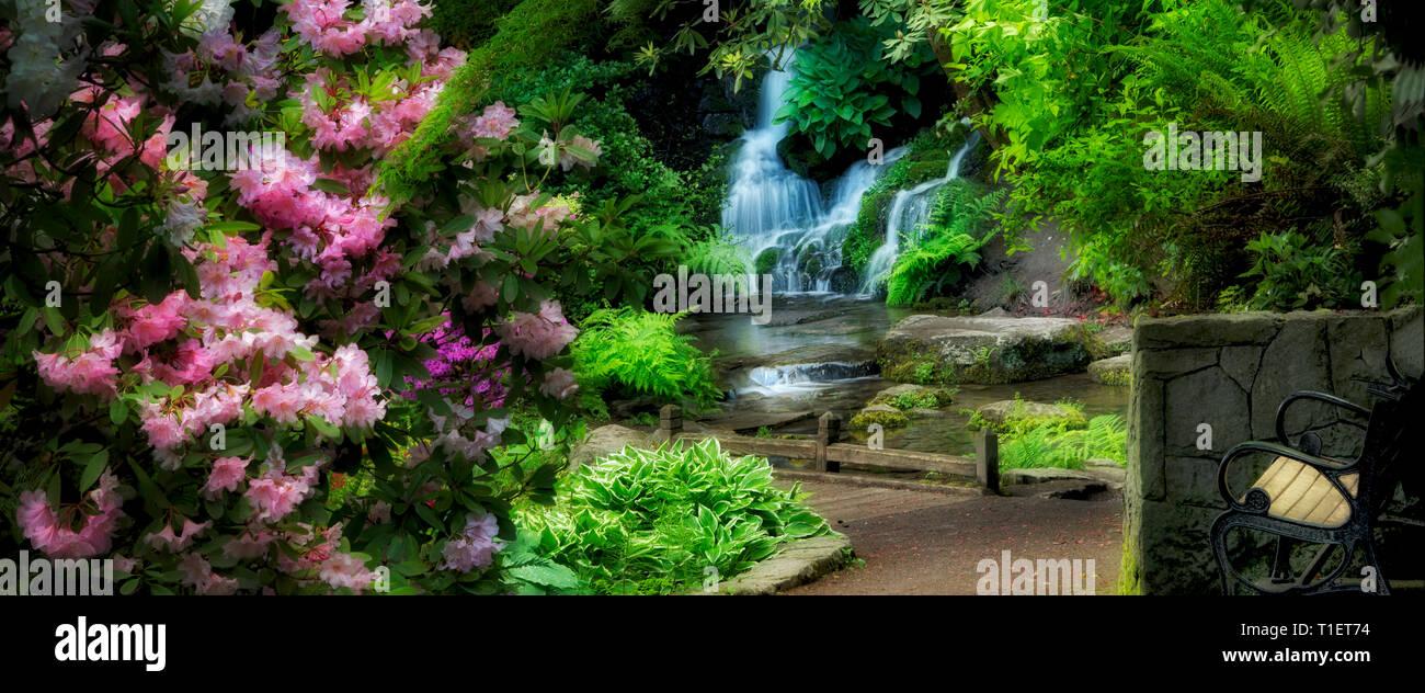 Rhododendren, Pfad und Wasserfall im Garten. Crystal Springs Rhododendron Gardens, Oregon Stockbild