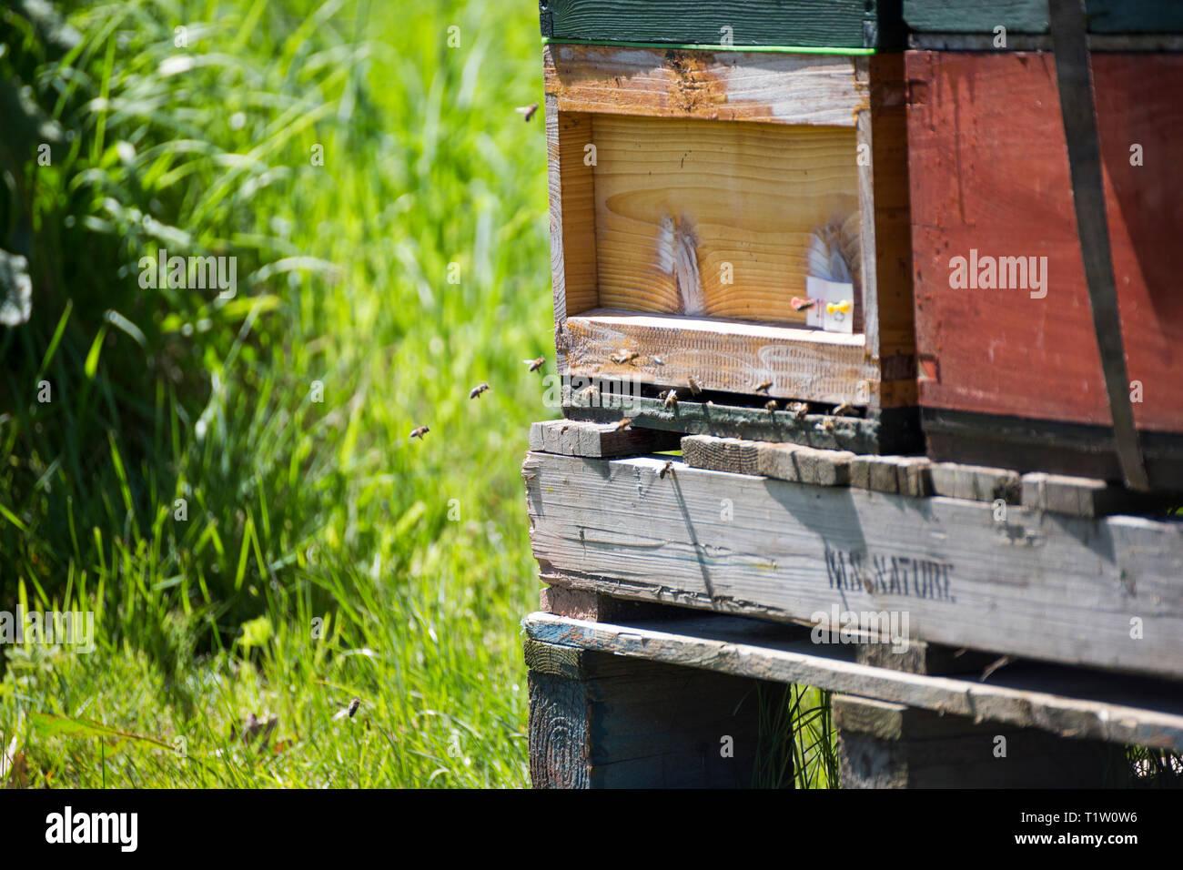 In der Nähe der Bienenstöcke in Herefordshire Stockbild