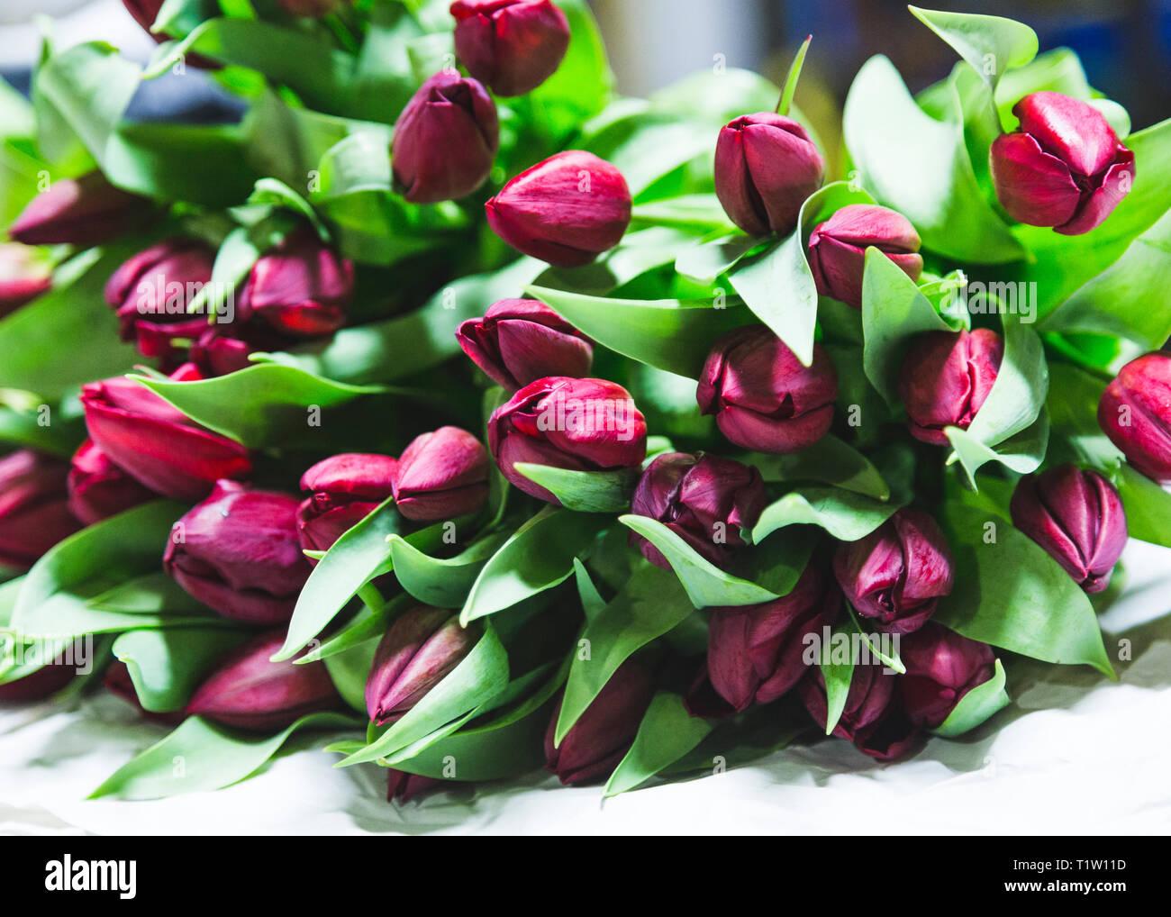 Ein paar schöne Tulpen Stockbild