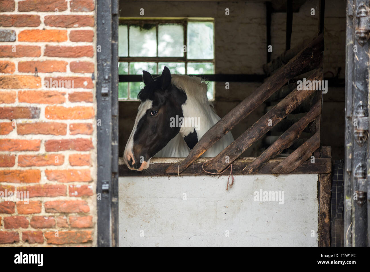 Pferd im Stall Stallungen Stockbild