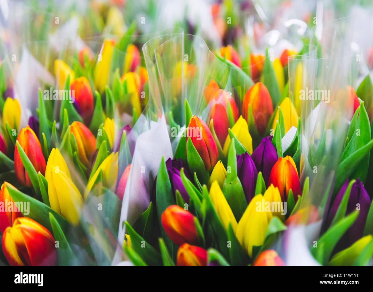 Mehrfarbige Trauben von Tulpen Nahaufnahme Stockbild