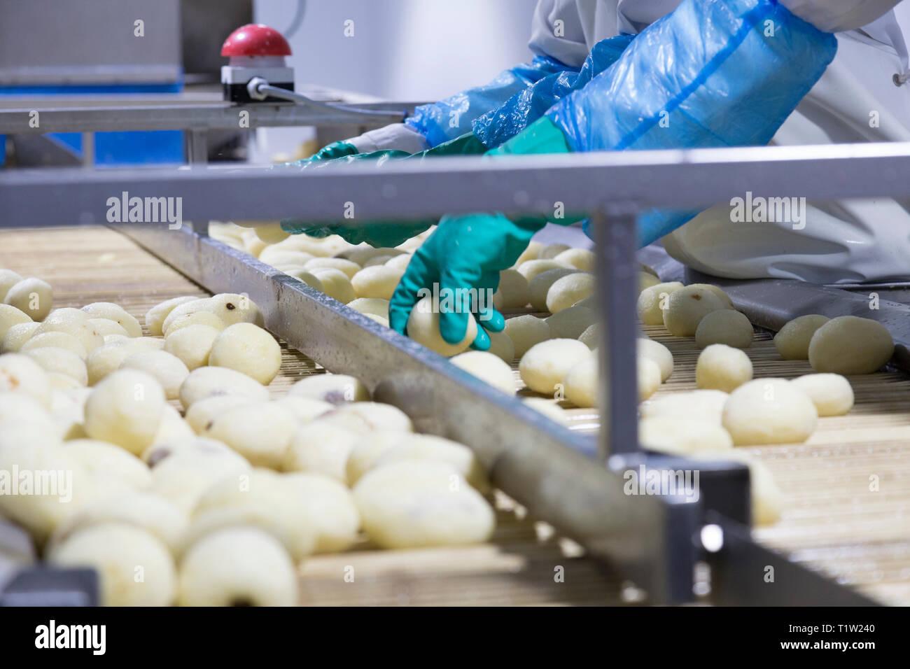 Kartoffeln gewaschen und von Hand überprüfen Stockbild