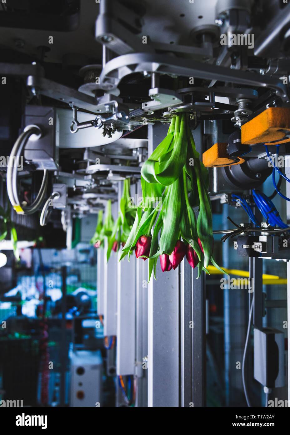 Zustand ot die Kunst Blumen Verarbeitung Furora Maschine Stockbild