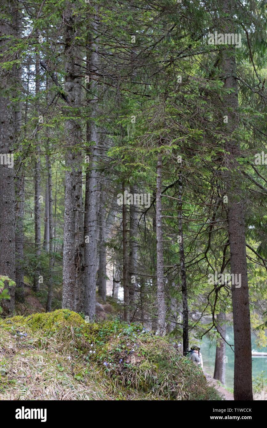 Ein Blick auf die erstaunlich Wald rund um das Bries See, Dolomiten, Italien Stockbild