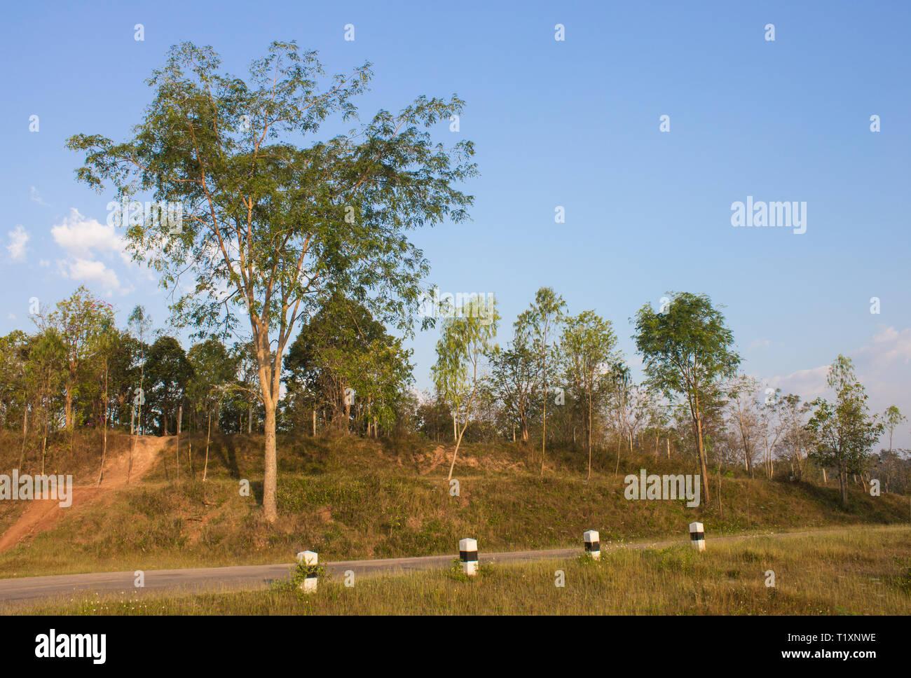 Baum auf Hügel mit blauen Himmel und im linken Frame. Baum Landschaft mit blauem Himmel und Straße bei gutem Wetter im Winter Stockfoto