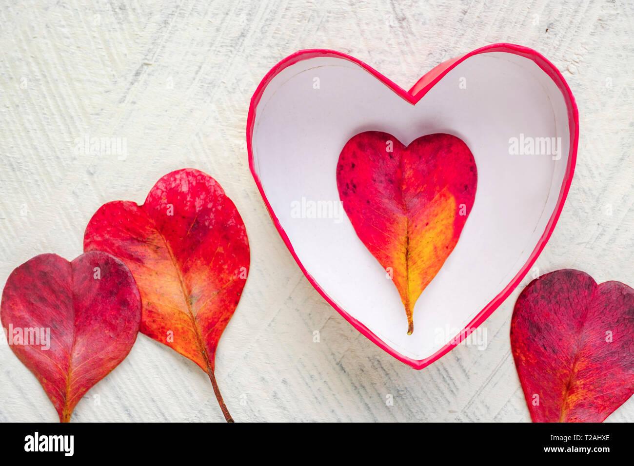 Rote herzförmige Blätter und Schüssel Stockbild