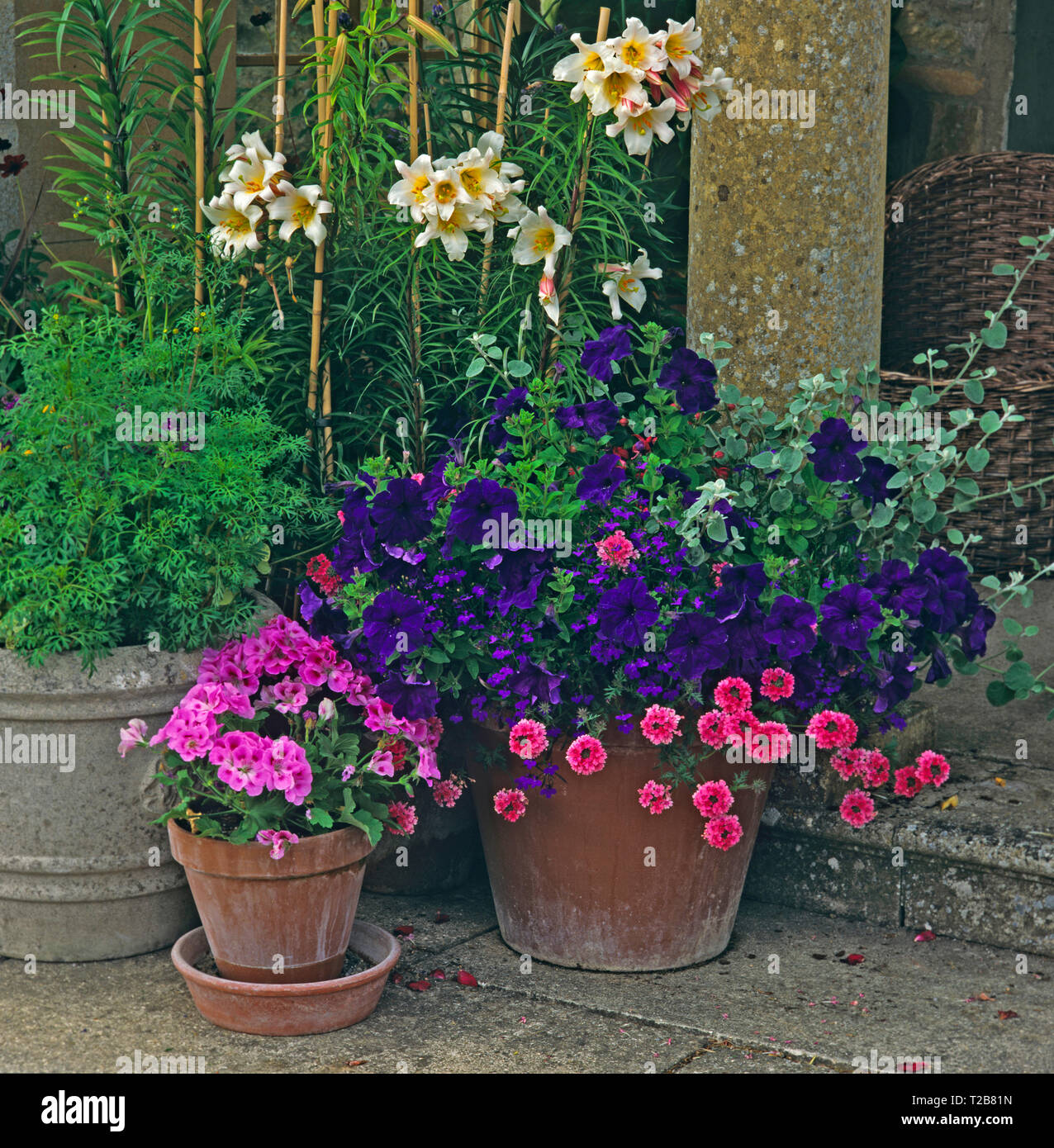 Ein Stein Terrasse mit Colouful gepflanzt Container mit Seerosen, Geranien und Petunien Stockbild