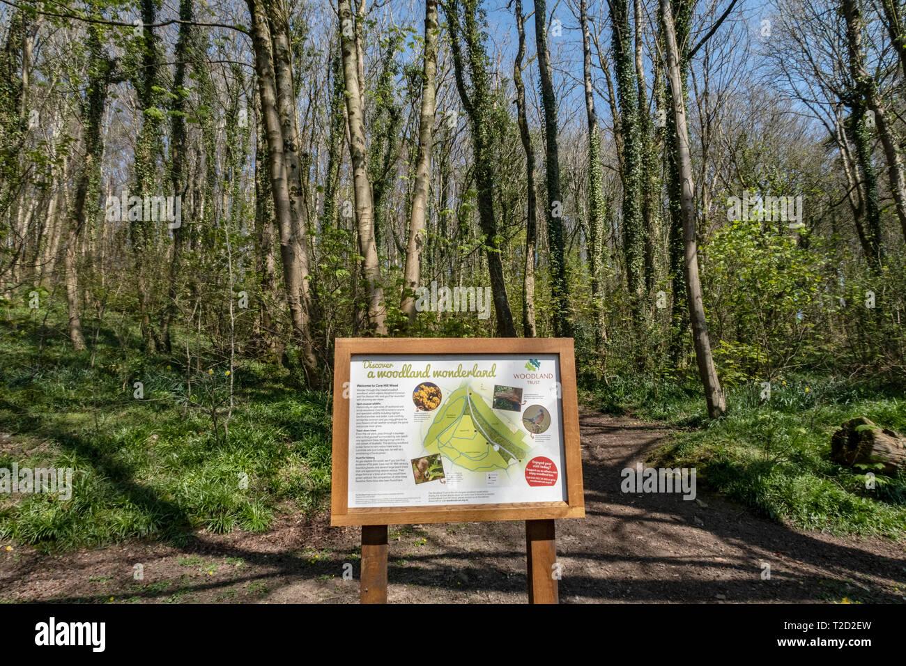Core Hill Holz, oben Honiton, Devon, Teil der Woodland Trust, mit Wanderwegen und gut zu Fuß gehen. Stockbild