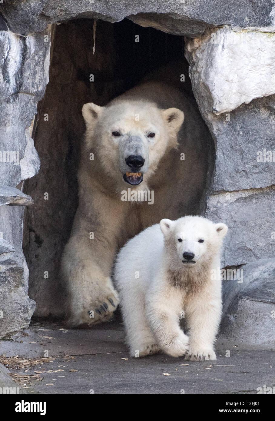Kleiner Eisbär Berlin Kleiner Eisbär On Tour 2019 12 16