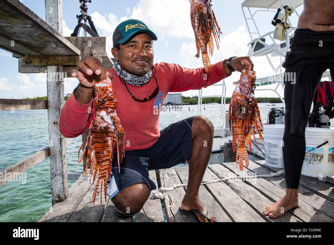 Invasive Feuerfische gefangen die Krokodile zu füttern, Pterois volitans, Banco Chinchorro, Karibik, Mexiko Stockbild