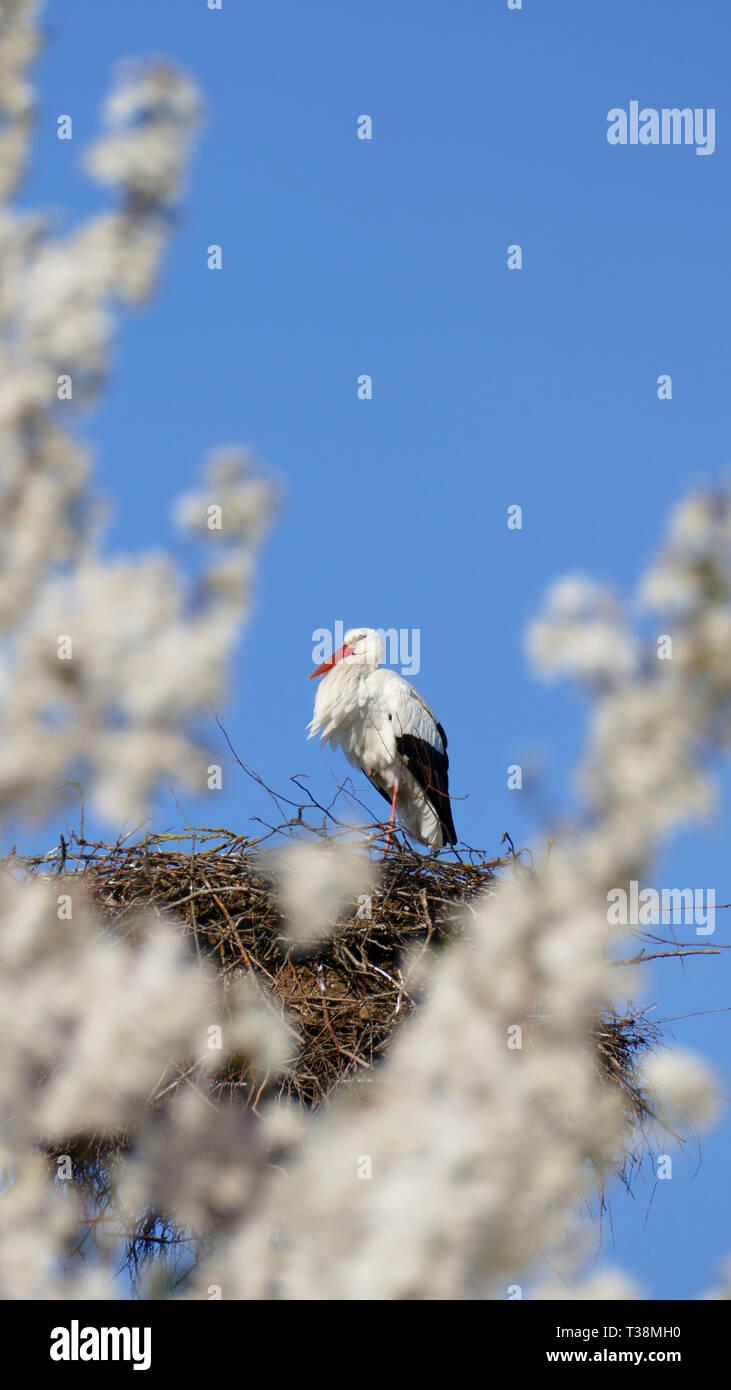 Storch im Nest, hoch über den Dächern der Stadt Stockbild
