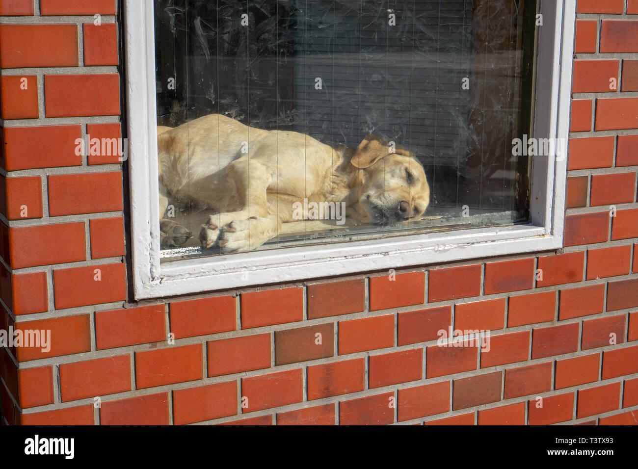 Ich habe diese glückliche Hund die Sonne durch das Fenster jeden Tag zu Fuß zum Kuramae Präfektur u-bahn Station auf dem Weg von Tokio zu erkunden. Stockbild