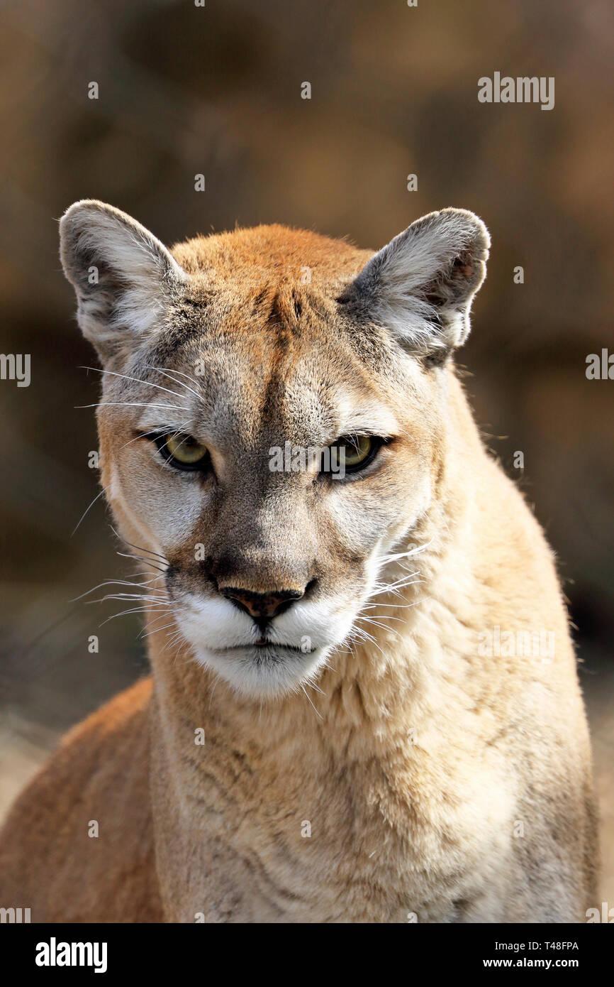 Cougar datiert Bewertungen uk Feinschillenmume Dating-Tagebuch
