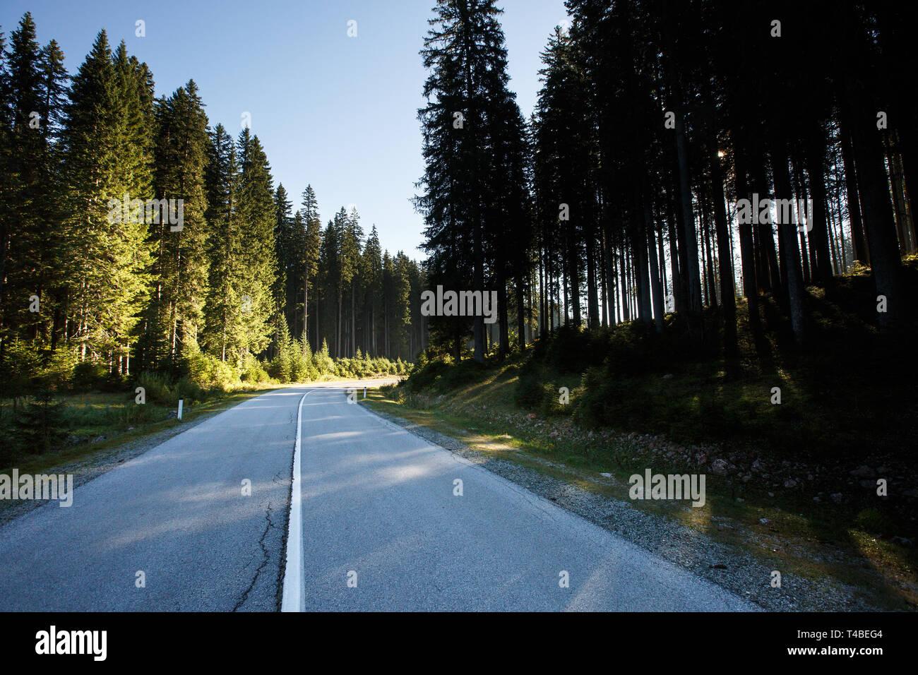 Einsame Straße durch gesunde Fichtenwald am Morgen Sonnenschein. Transport und nachhaltige Industrie, umweltfreundliche Forstwirtschaft, natürliche environme Stockbild