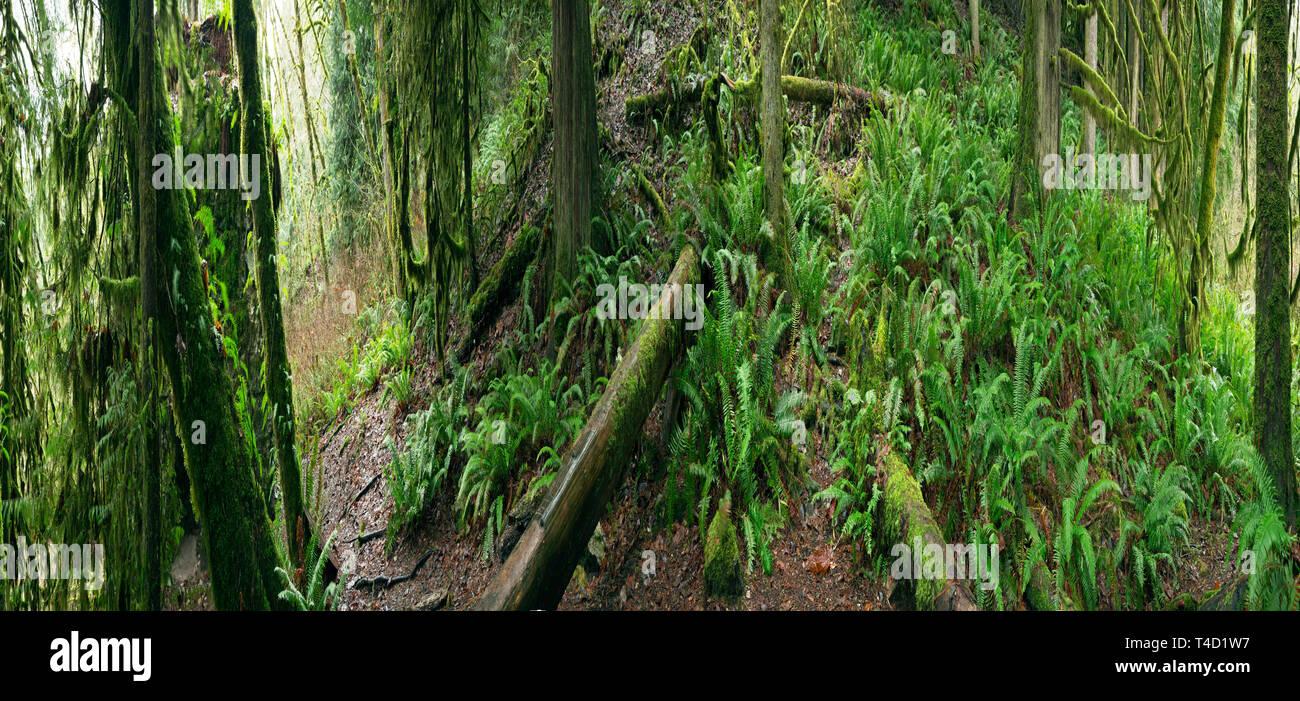 WA... 1614-00 WASHINGTON - Regenwald an der alten, verlassenen Kalkofen in der Robe Tal und entlang der historischen Everett - Monte Cristo Railroad entfernt Stockbild