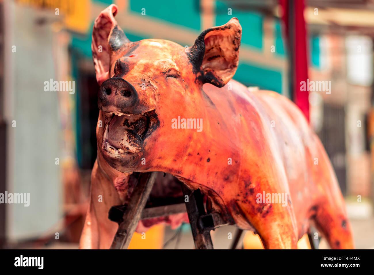 Körper von einem Schwein getötet, als Speisen zubereitet werden. Es ist üblich, Schweine, die auf diese Weise in mehrere Teile von Ecuador ausgestellt zu finden Stockbild