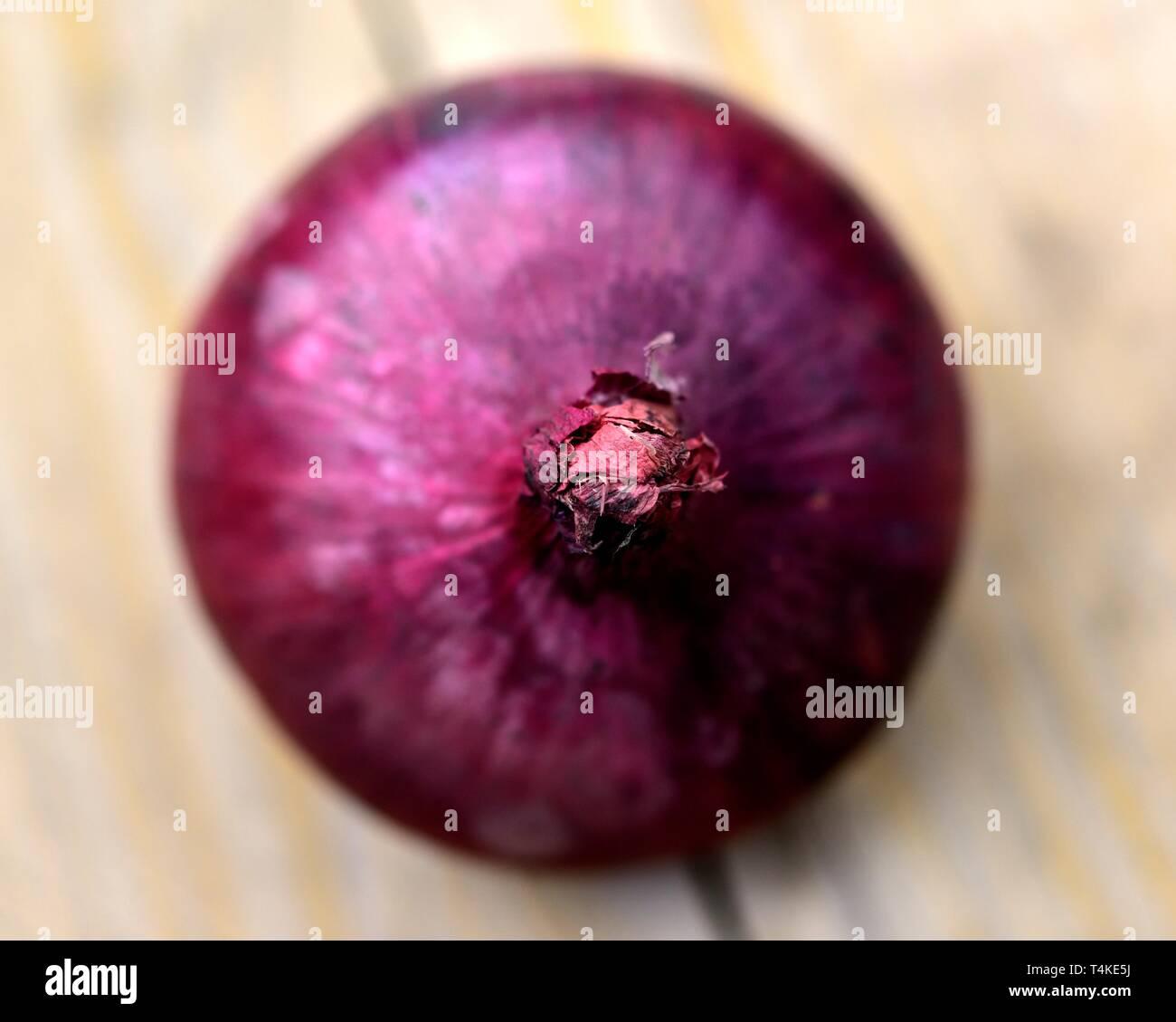 Rote Zwiebel, Allium cepa Stockbild