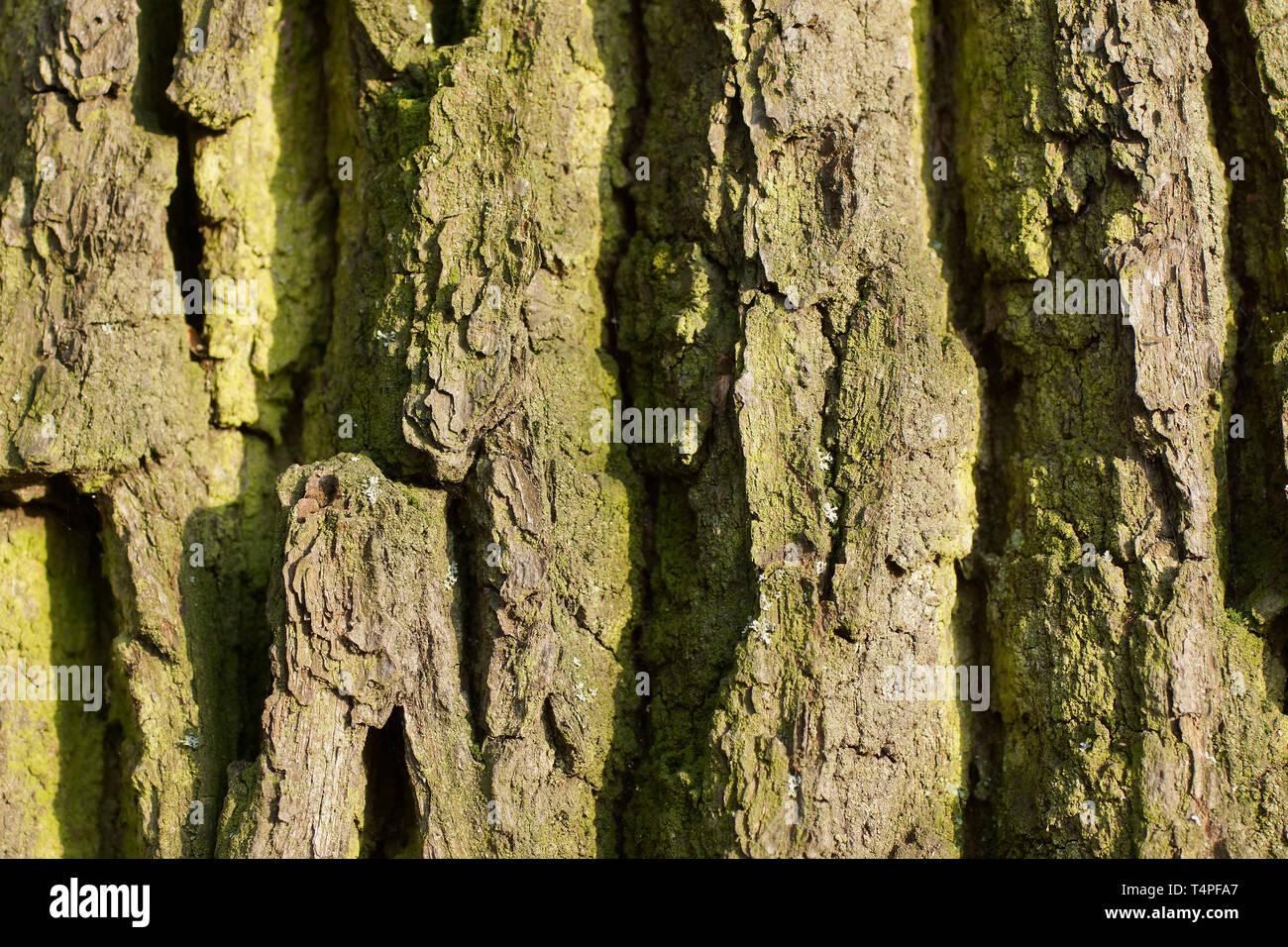 Rinde eines Baumes Stockbild