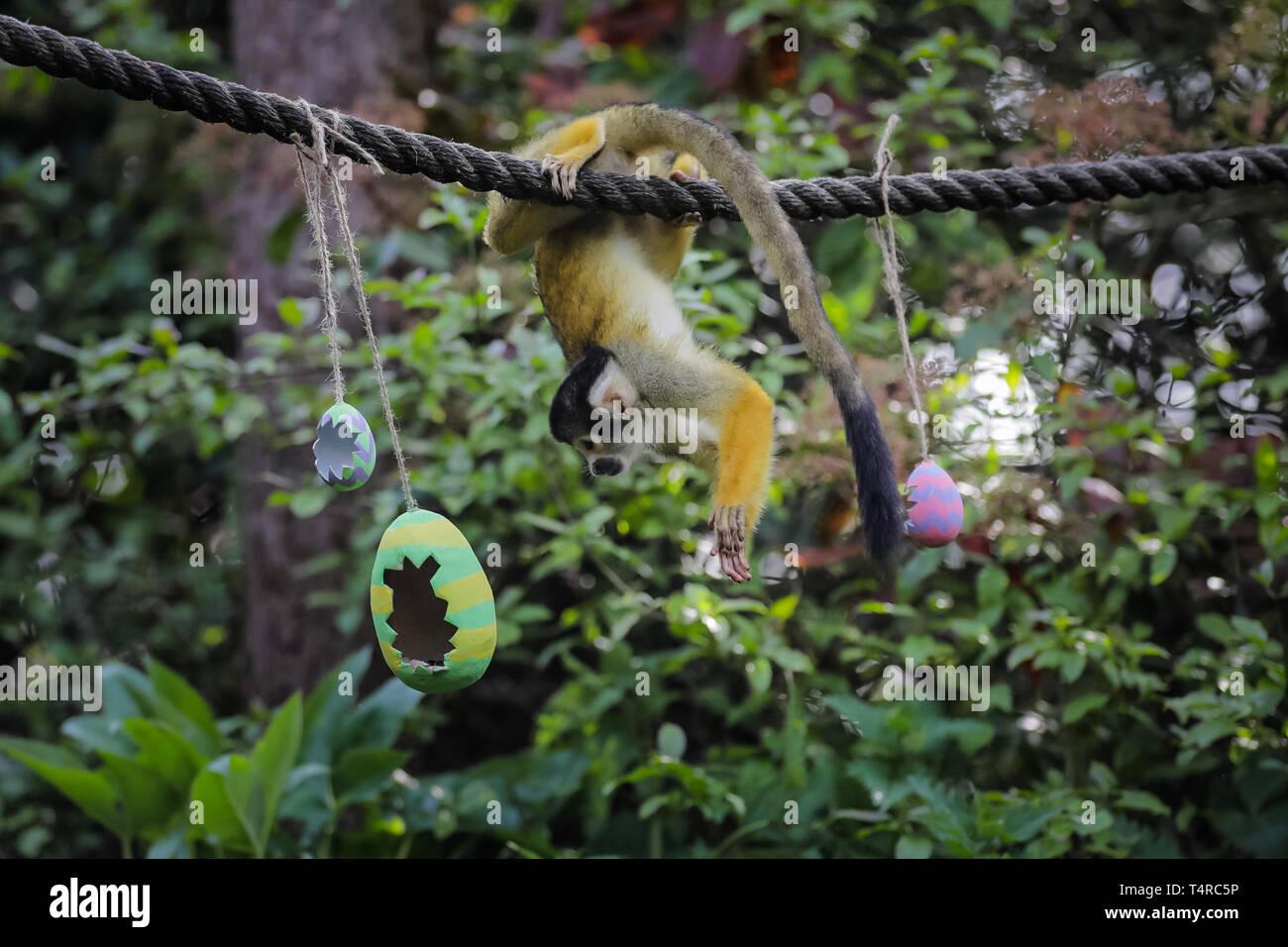 Christbaumkugeln Pappmache.Buntes Papiermaché Stockfotos Buntes Papiermaché Bilder Alamy