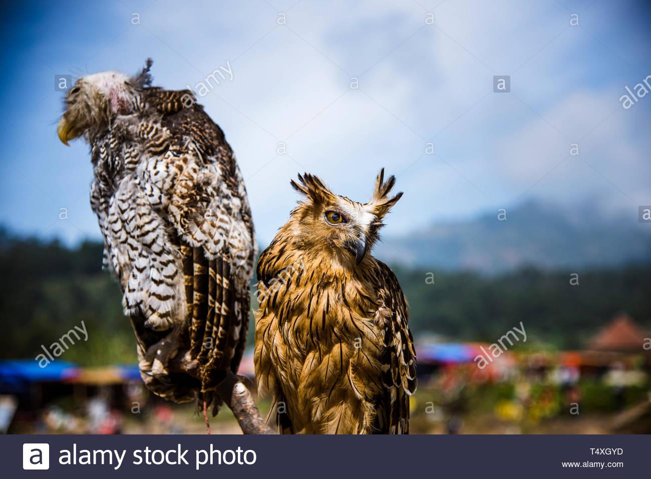 Zwei große Vögel schauen weg Stockbild