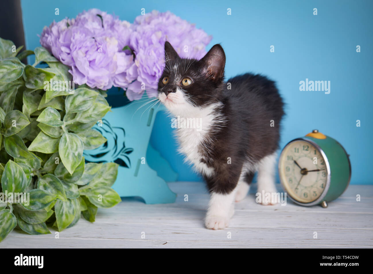 Tabby Black White Kitten Flowers Stockfotos & Tabby Black