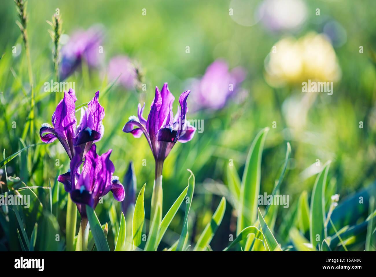 Steppe Flower Stockfotos & Steppe Flower Bilder
