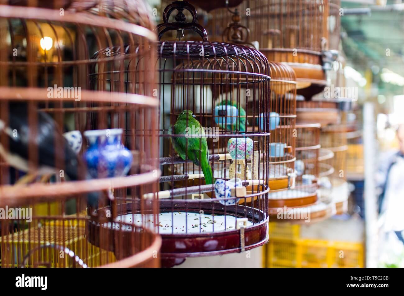 Vogelmarkt, Hong Kong Stockbild