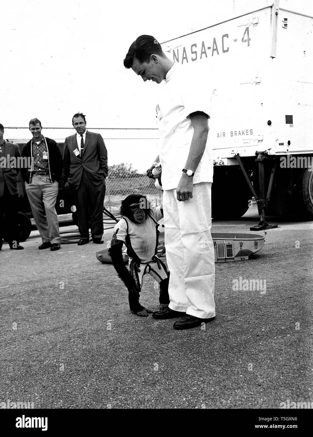 Dompteur, Schinken, der erste Schimpanse je in den Weltraum zu reiten, Cape Canaveral, Florida, 1961. Mit freundlicher Genehmigung der Nationalen Luft- und Raumfahrtbehörde (NASA). () Stockfoto