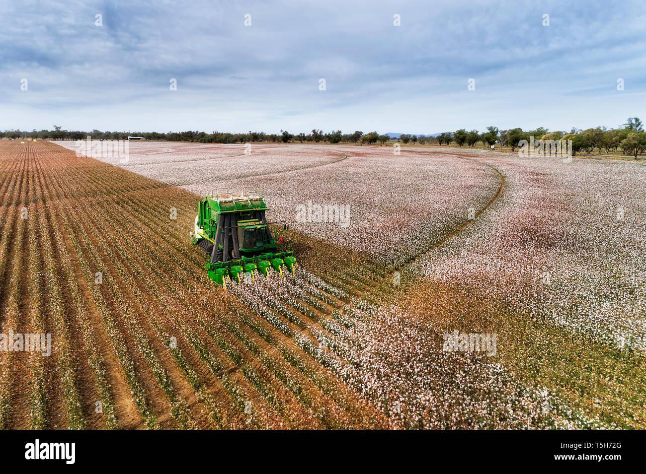 Geraden Reihen von Baumwollpflanzen mit blühenden weißen Felder von grünen Industrieller Traktor unter blauem Himmel geerntet, zu erhöhten Perspektive auf einem Bauernhof Stockfoto