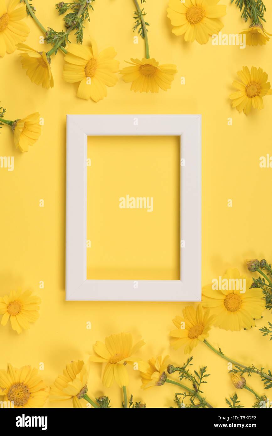 Blumen Komposition. Kamillenblüten mit Bilderrahmen auf gelben Hintergrund. Frühling, Sommer Konzept. Flach, Ansicht von oben, kopieren Raum Stockfoto