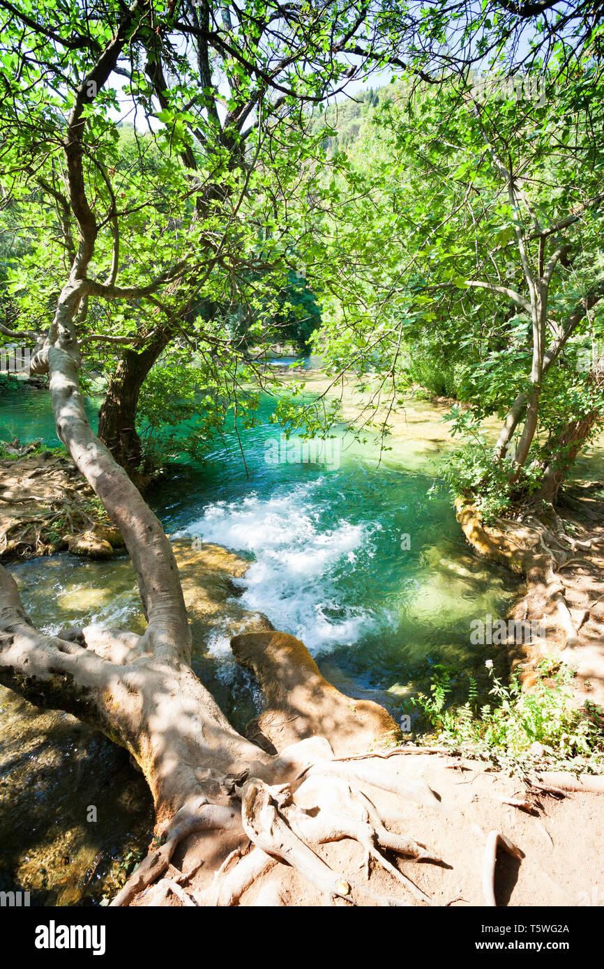 Krka, Sibenik, Kroatien, Europa - Ein alter Baumstamm senkrecht über den Fluss wachsenden Stockfoto