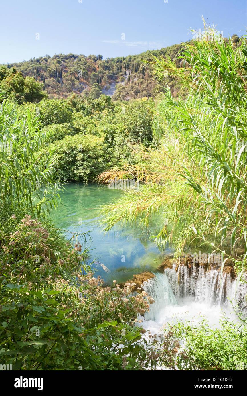 Krka, Sibenik, Kroatien, Europa - Wasser Reed in einem kleinen Sturz in den Nationalpark Krka Stockfoto