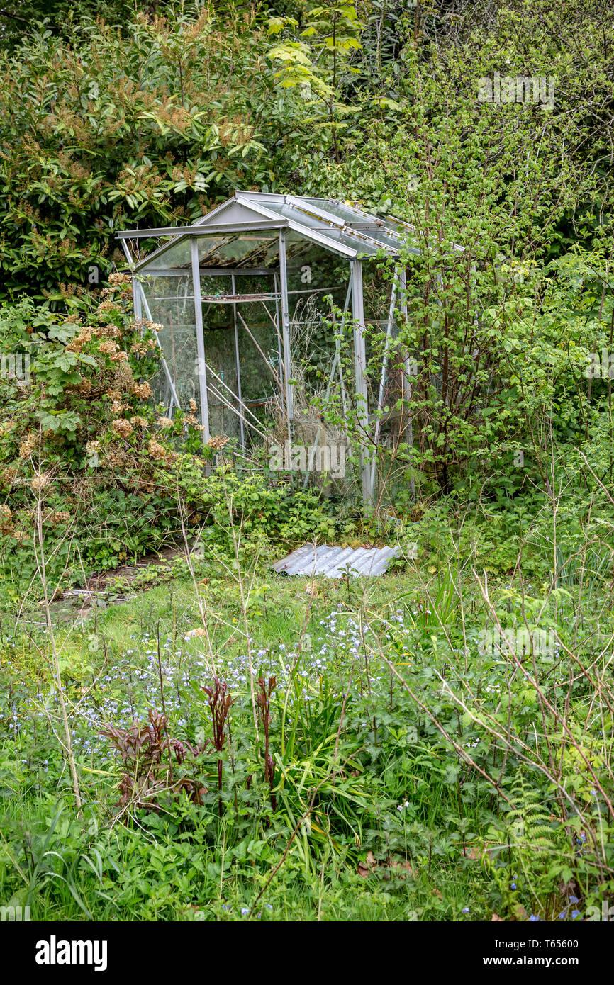 Aufgegeben, Gemüsegarten, bewachsen, Außen, Gewächshaus, 2015, Struktur, Blume, Glas - Material, Gras, Grün, Horizontal eingebaut Stockbild