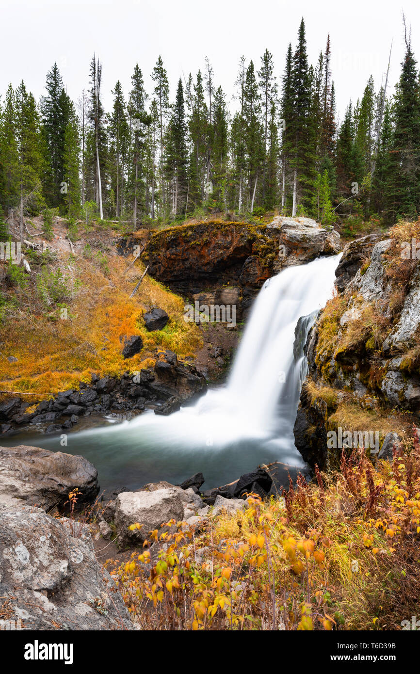 Elche fällt, Langusten Creek, Yellowstone National Park, Wyoming, USA Stockfoto