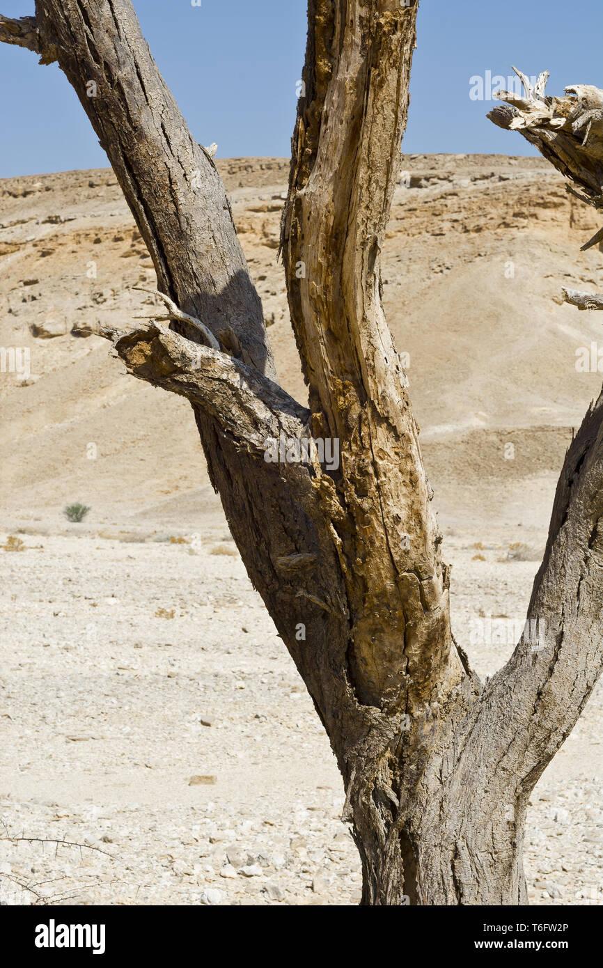 Das Leben in einer leblosen Wüste Stockfoto