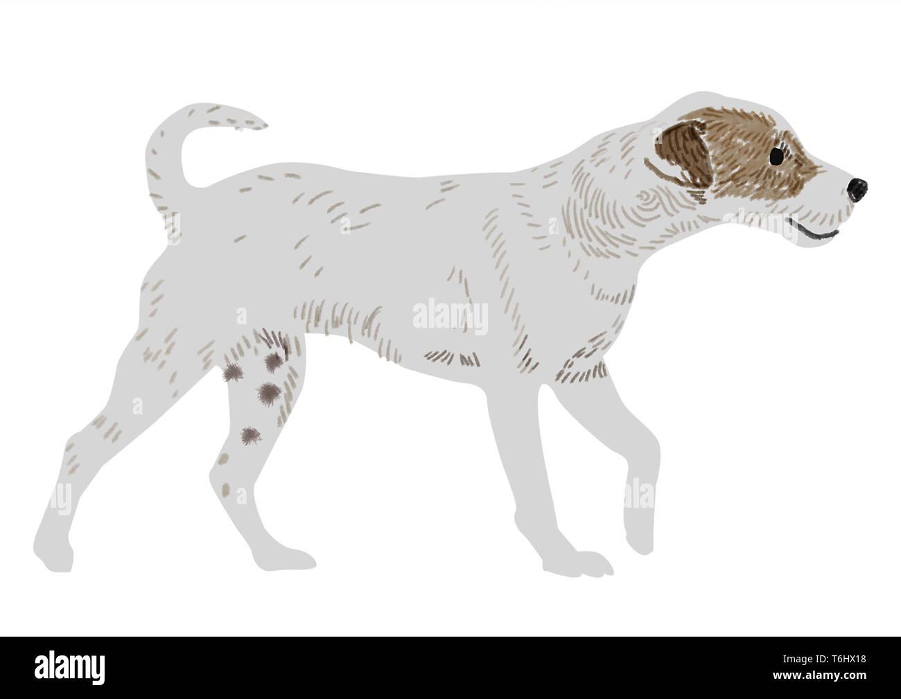 Jack Russel Hund Stockbild