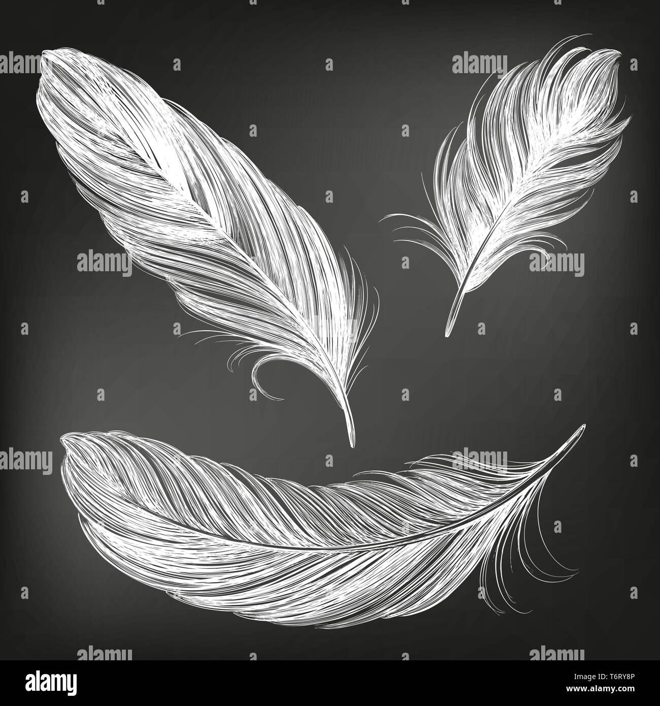 Federn weiß Sammlung Hand gezeichnet Vektor-illustration Skizze, in Kreide auf einer Tafel gezeichnet Stockbild