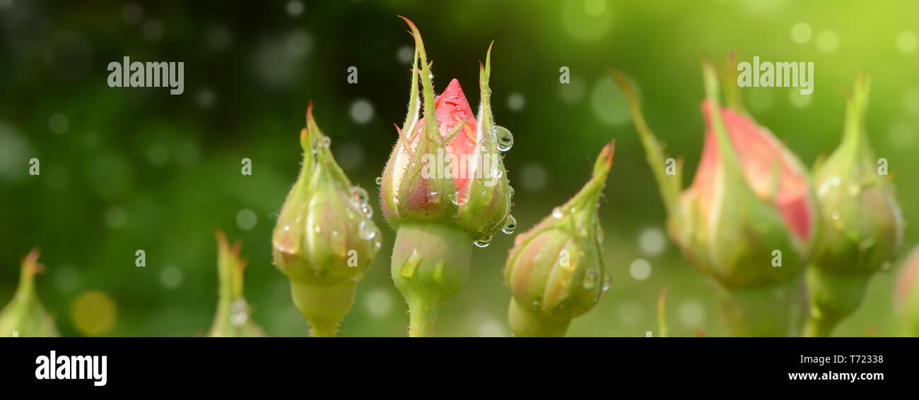 Blumen 587 Stockbild