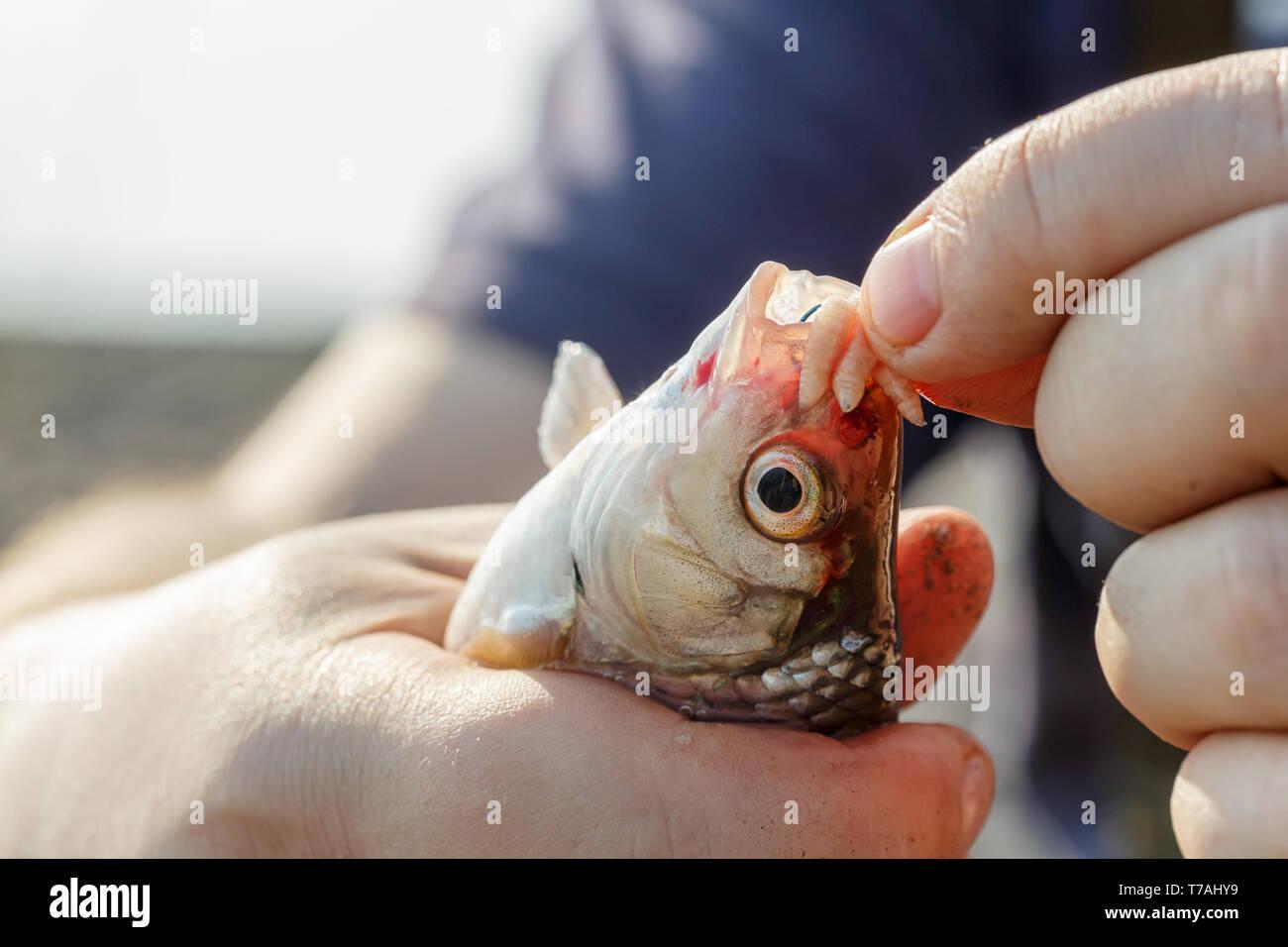 Kapuze anhakenDating-Website besser als viele Fische