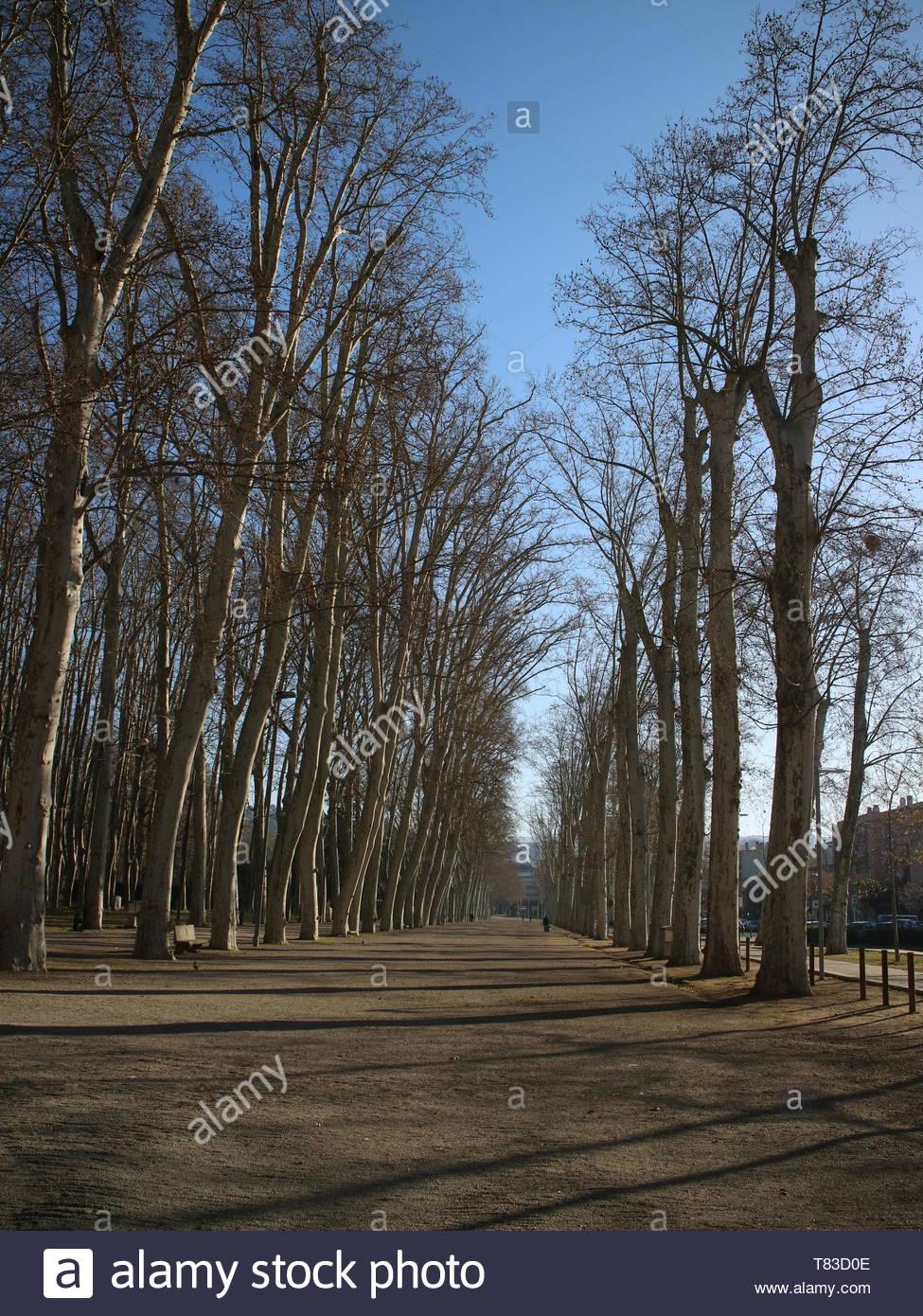 Parc de la Devesa Girona Spanien Frühjahr morgen mit einer Person zu Fuß nach Klasse Stockfoto