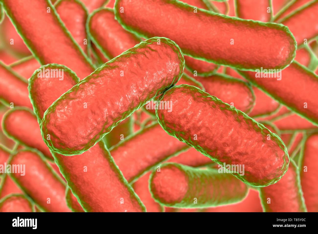 Bakterien, Abbildung Stockbild